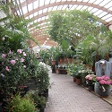 Arbres_fleurs_et_végétaux_Les_Jardins_de_Provence_Althen-des-Paluds